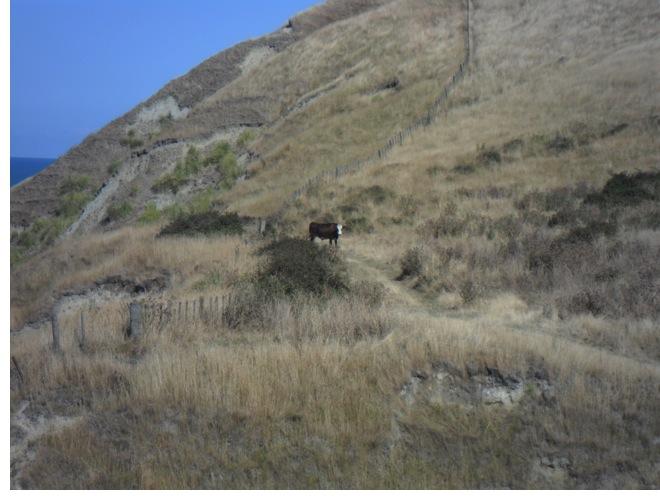 Gate-guarding, man eating Cow...